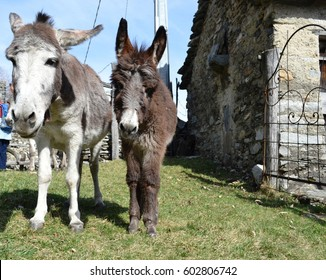 two nice donkeys are photographed in mountain pastures