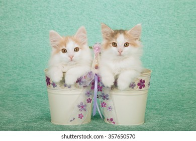 Two Norwegian Forest Cat kittens sitting inside pails buckets decorated with ribbon on mint green background