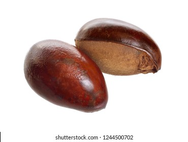 Two nuts Vitellaria paradoxa , commonly known as shea tree or shi tree, Karite. Isolated on white background. Full depth of field.