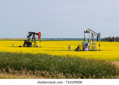 Two Oil Wells in a Bright Yellow Canola Field on the Canadian Prairie