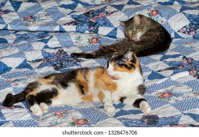 Two old cats on a bed, a brown tabby and a calico, grooming themselves
