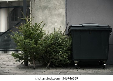 Two old christmas trees thrown away next to a trashcan