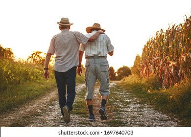 Two old friends.Two senior friends walks trough corn field on sunset.