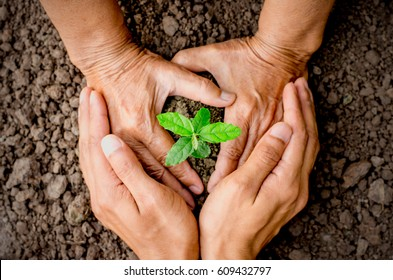 Two old woman's hands are planting seedlings into the soil. As the young man's hand was gently encircled.