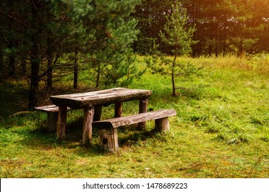 Two old wooden benches and a table in the forest in the green grass. Picnic in the forest. forest wooden table and benches for relaxation