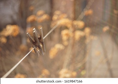 Two old wooden clothespins hang on a rope in a sunny garden