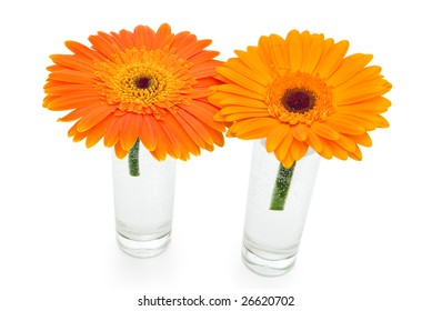 two orange gerbera flowers isolated on white
