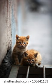Two orange kitten outdoor