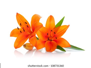 Two orange lily. Isolated on white background