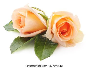Two orange roses isolated on a white background.