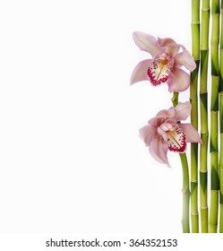 Two orchid with bamboo grove