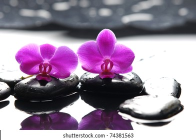 Two orchid and black stone with reflection