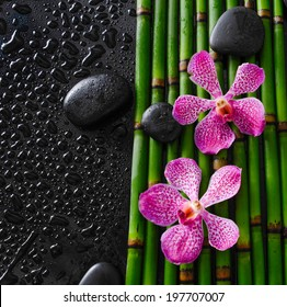 Two orchid with black stones on bamboo grove on wet