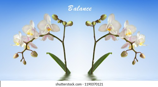 two orchids in the water