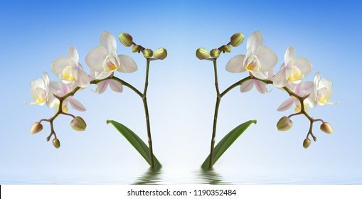 two orchids with water and waves