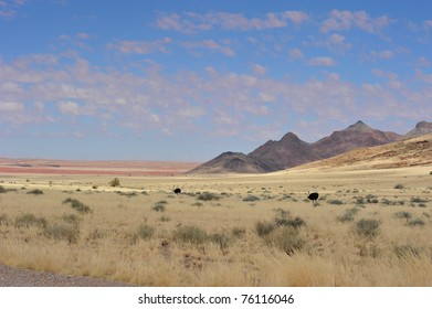 Two ostiches in Namibia near dunes