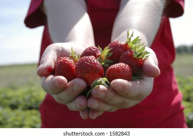Two outstretched hands holding a bunch of ripe strawberries.