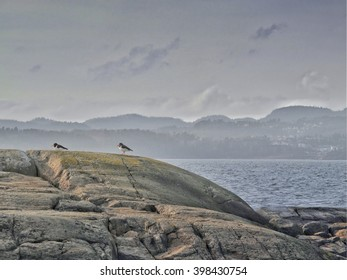 Two oystercatchers sitting on a huge boulder by the sea in Norway. In the background, on the other side of the bay lies the hilly landscape and the city of Larvik. The harsh weather. Soft light.