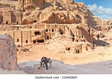 Two pack mules in Ancient Petra city Jordan