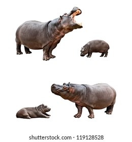 Two pairs of family hippos and babes with different emotions