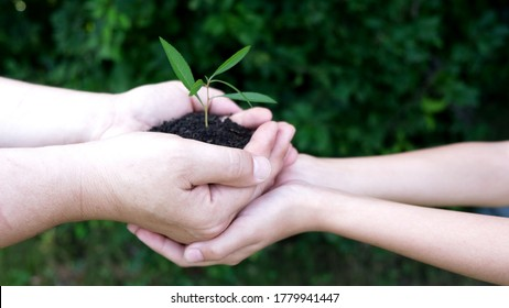 Two pairs of hands holding the seedlings with the soil at the sunny day in  backyard garden. The concept of ecology, environmental protection. Two hands of the man gives plants to a kid hands at farm
