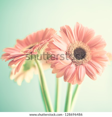 Two pale pink flowers stock photo edit now 128696486 shutterstock two pale pink flowers mightylinksfo