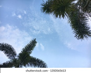 Two palm leafs over blue sky background with copy space. Palm trees perspective view.