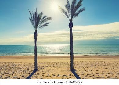 two palm tree in sunny lonely beach. Guardamar del segura, Alicante. Spain