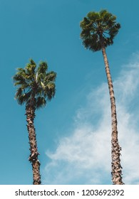 Two Palm Trees against blue sky, shot from below, cloudy