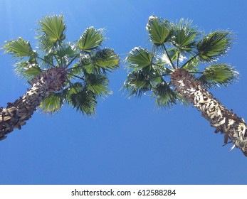 Two palm trees against a bright blue sky, seen from below