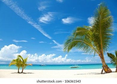 Two palm trees on a beach in Bantayan island, Philippines