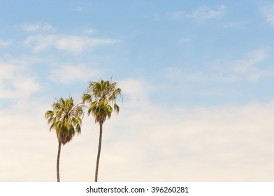 Two palm trees on blue sky background