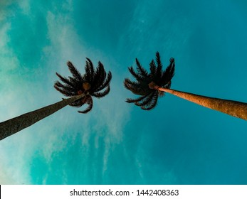 two palm trees view from below with the blue sky in the background