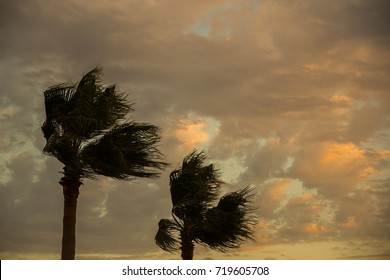 Two palm trees in the wind.