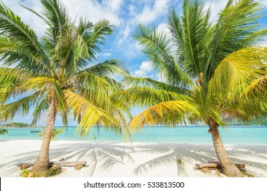 Two palms on the tropical beach.