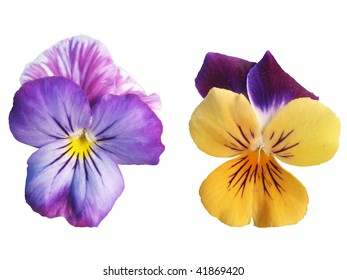 Two Pansy flowers isolated over white background. Clipping Paths are included in the Paths Tab