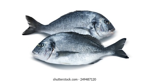 Two parallel dorado fish isolated on white background for menu, poster and design