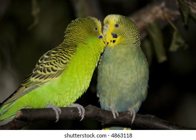 two parrots in love - Shutterstock ID 4863118