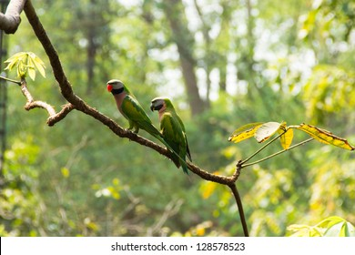 Two parrots on a branch in the forest