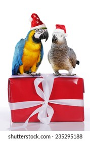 Two parrots on a Christmas gift with santa hat