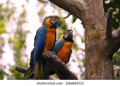 Two parrots on a perch