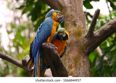 Two parrots on a perch, one glancing at the camera