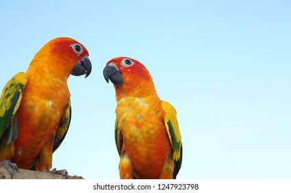 Two Parrots On Timber Parakeet On The Wood Cute Green Bird On Timber Wood