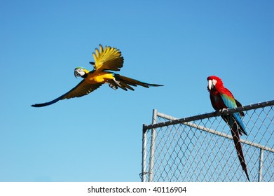 Two parrots, one in flight