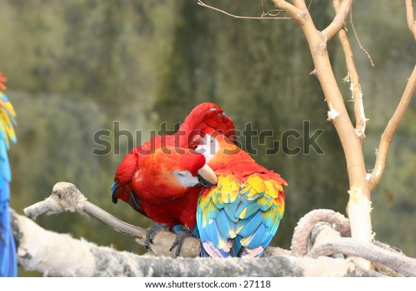 Two parrots sitting on a tree branch.