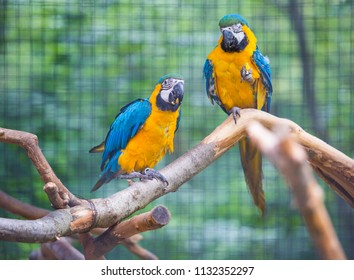 Two parrots stiing on branch