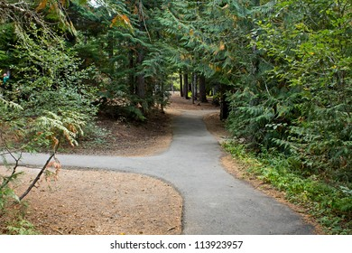 Two paths going in different directions in the forest.