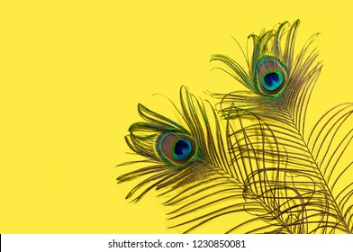Two peacock feathers on a yellow background, top view, flat lay. Trend bright colors. Space for text.