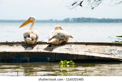 Two pelicans on a boat enjoying the view noticing the photographer