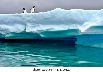 Two penguins on an ice floe near Cuverville Island, Antarctica